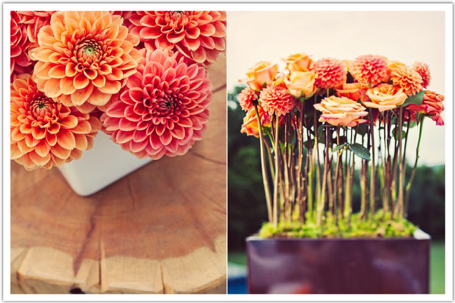 modern orange flowers